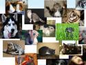 Украина, соцсеть для животных, Мордашки.com